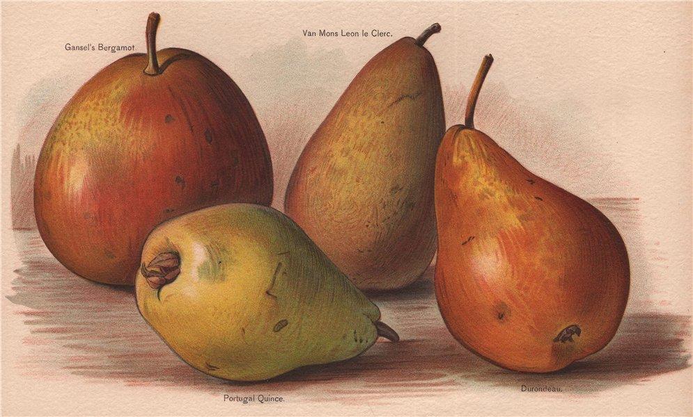 Associate Product PEARS Gansel's Bergamot; Van Mons Leon le Clerc; Portugal Quince; Durondeau 1892