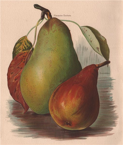 Associate Product PEARS. Pitmaston Duchess; Durondeau. WRIGHT Chromolithograph 1892 old print