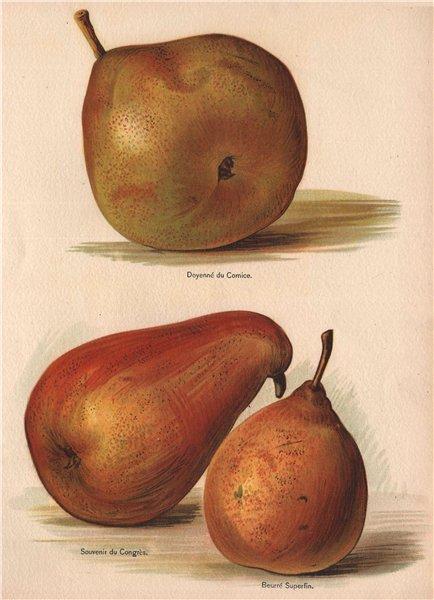 Associate Product PEARS. Doyenné du Comice; Souvenir du Congrès; Beurré Superfin. WRIGHT 1892