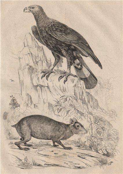 Associate Product ANIMALS/BIRDS. Aigle Commun (Golden Eagle). Agouti 1834 antique print