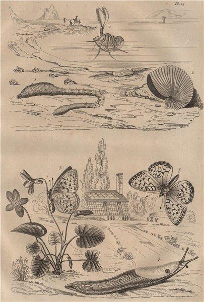 Associate Product Lugworm.Argonaut (paper nautilus).Fritillary butterfly.Arion roundback slug 1834