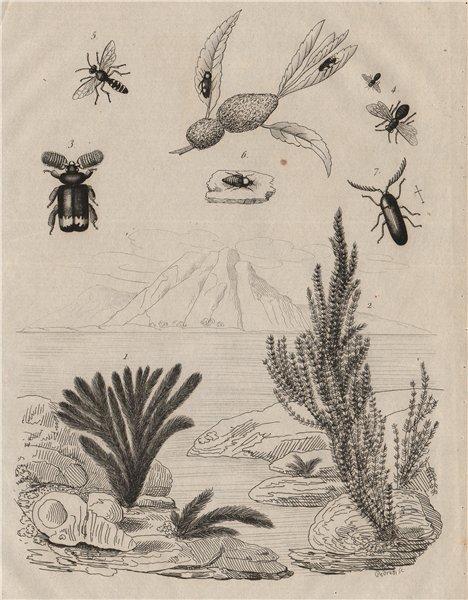 Cerapterus (Ant nest beetle). Ceratina. Cerceris wasp. Froghopper. Blaptini 1834