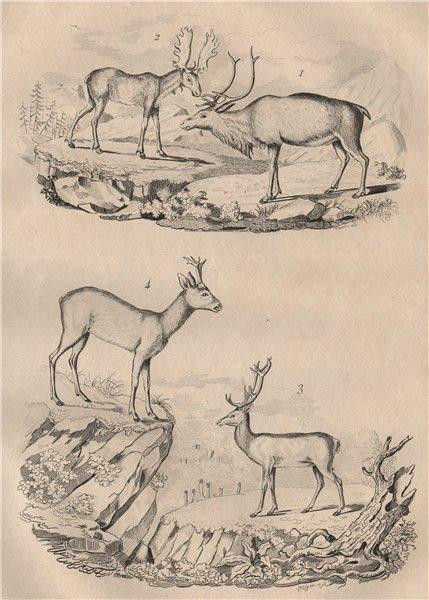 Associate Product Cerfs (Deer). Renne (Reindeer). Elan (Moose). Chevreuil (Roe deer) 1834 print