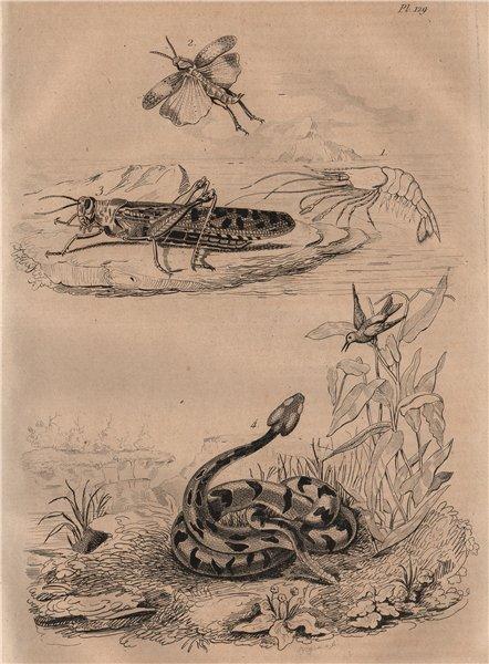 Associate Product ANIMALS. Crevette (Shrimp). Criquet (Locust). Crotale (Rattlesnake) 1834 print