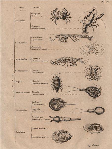 Associate Product CRUSTACEANS. Crustacés (Crustaceans) 1834 old antique vintage print picture