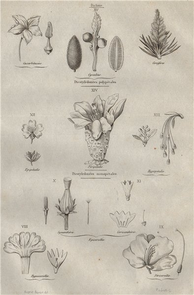 Associate Product PLANT FAMILIES. Familles vegetales. Dicotyledons (Dicots). Mono/many petals 1834