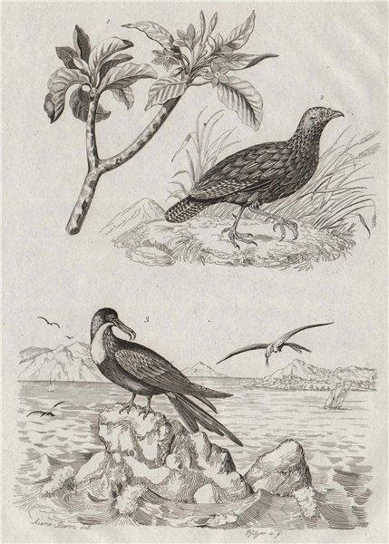 BIRDS. Frangipani. Francolin. Frégate (Frigatebird) 1834 old antique print