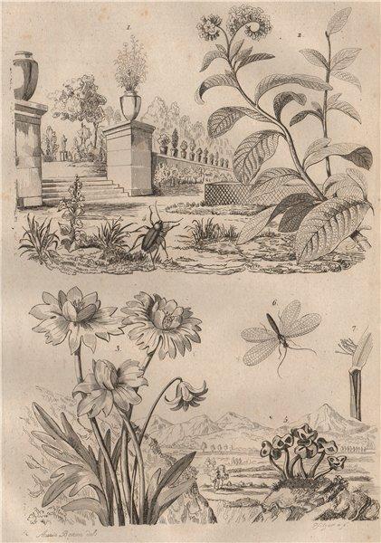 Associate Product Heliotropium. Helleborus. Helops caeruleus beetle. Helvella fungus.Lacewing 1834