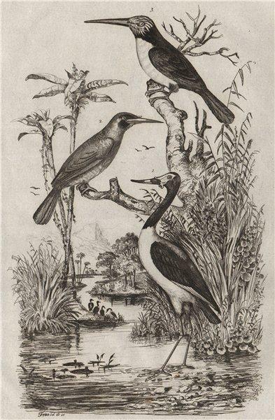 Associate Product BIRDS. Jabiru stork. Jacamar. Jacamaralcyon (three-toed Jacamar) 1834 print