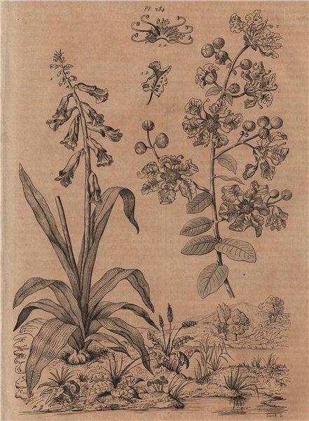 Associate Product PLANTS. Lachenalia. Lagerstroemia 1834 old antique vintage print picture