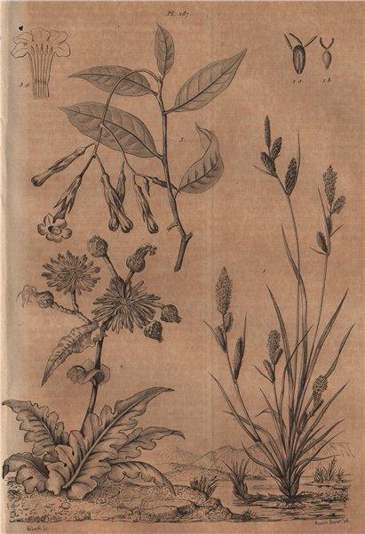 Associate Product PLANTS. Laiche (Carex). Laitron (Sonchus). Lamarckia 1834 old antique print