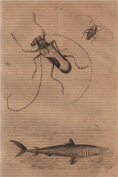 Associate Product ANIMALS. Lamia textor (Weaver Beetle). Mackerel Shark 1834 old antique print