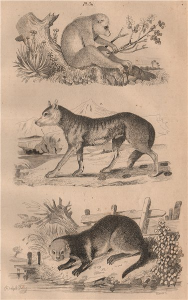 Associate Product MAMMALS. Loris. Loup (Wolf). Loutre (Otter) 1834 old antique print picture