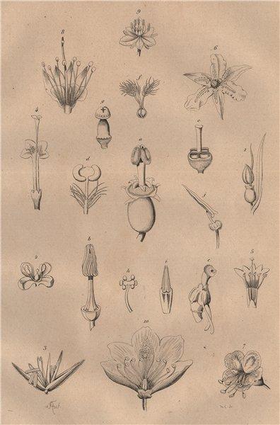 Associate Product PARTS OF FLOWERS. Mariage des Plantes. Plants 1834 old antique print picture