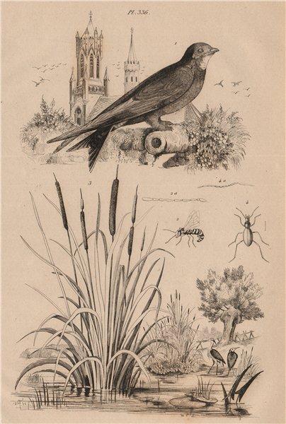 Associate Product Martinet (Swift). Masaris vespiformis wasp. Massette (bulrush). Mastige 1834