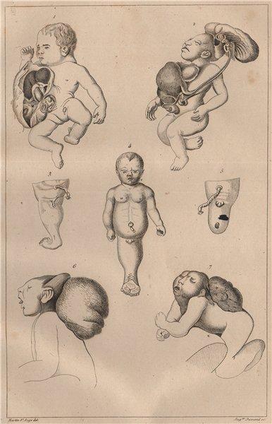 """Associate Product MUTATIONS. """"Monstruosités"""" Pl. VI 1834 old antique vintage print picture"""