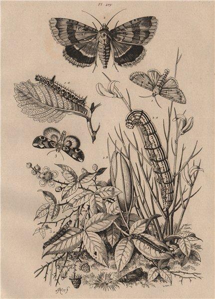 OWLET MOTHS. Noctuelles (Noctuidae). Psi/Spectre/Batis. Caterpillars 1834