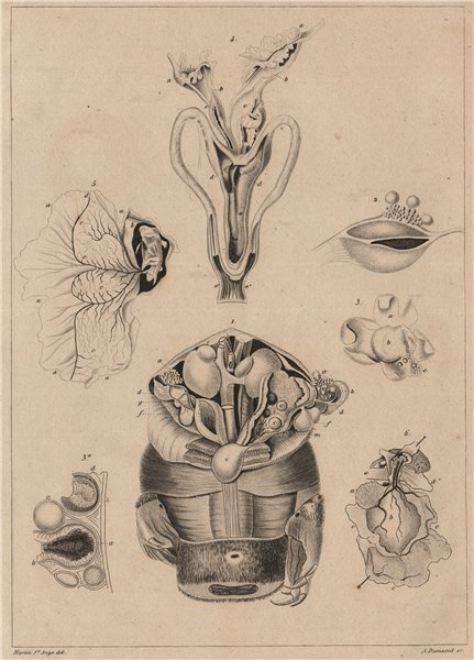 REPRODUCTIVE SYSTEM. Ovologie Ovology II. Eggs. 1834 old antique print picture