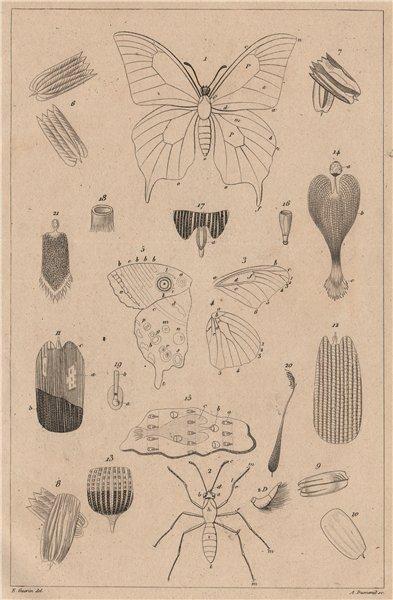 Associate Product LEPIDOPTERA. Papillons (Butterflies) I. Détails théoriques et anatomiques 1834