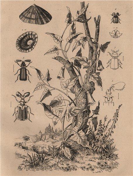Associate Product FOOD. Patate (Potato) plant. Patelle (Limpet). Pausse (Ant nest beetle) 1834