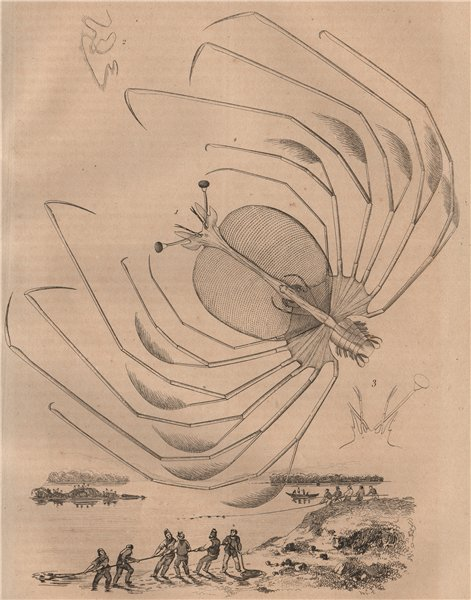 Associate Product PHYLLOSOMA. Larval stage of spiny, slipper & coral lobsters. Crustaceans 1834
