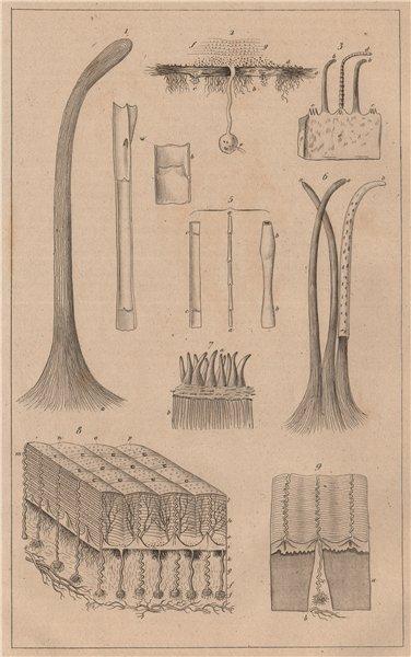 Associate Product SKIN. Physiology. Structure et fonctions de la Peau. Pores. Hair 1834 print