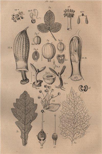 Associate Product PLANTS. Physiologie Végétale. Leaves stems seeds 1834 old antique print