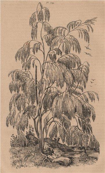 Associate Product FLOWERING PLANTS. Plocama. Rubiaceae 1834 old antique vintage print picture