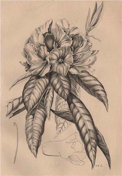 PLANTS. Rosage. Flowers 1834 old antique vintage print picture