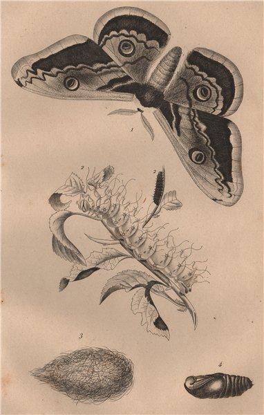 Associate Product LEPIDOPTERA. Saturnie du Poirier (Giant Peacock Moth) 1834 old antique print