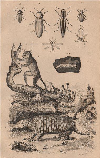 Associate Product Tarsier. Tatou (Armadillo). Taupin (click beetle). Teigne (moth) 1834 print