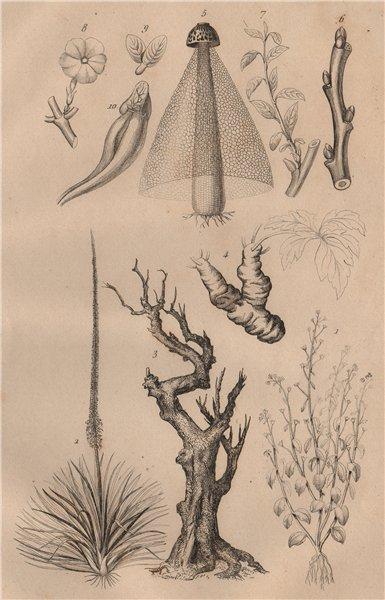 Associate Product STEMS OF PLANTS. Végétaux (Tiges) 1834 old antique vintage print picture