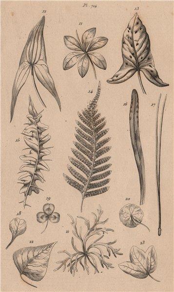 Associate Product LEAVES OF PLANTS. Végétaux (Feuilles) 1834 old antique vintage print picture