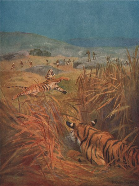 Associate Product 'Tigers - the terror of Indian villages' by Harry Dixon. India 1913 old print