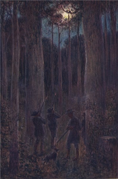 """Associate Product ''The Australian forest at night """"Mooning"""" Opossums' by Percy Spence 1910"""
