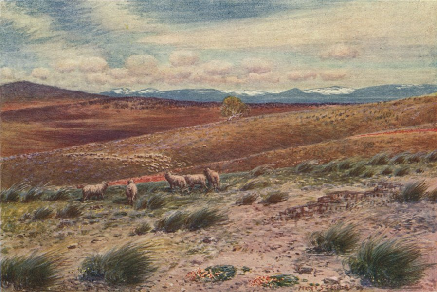 Associate Product The Snowy Mountains; near to Federal Capital site. Percy Spence. Australia 1910