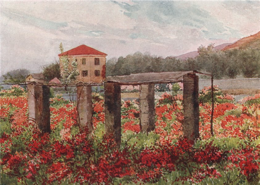BORDIGHERA. 'A rose garden, Bordighera' by William Scott. Italy 1907 old print