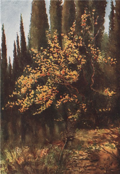 Associate Product 'Autumn tints in the Cypress Valley' by William Scott. Italy 1907 old print