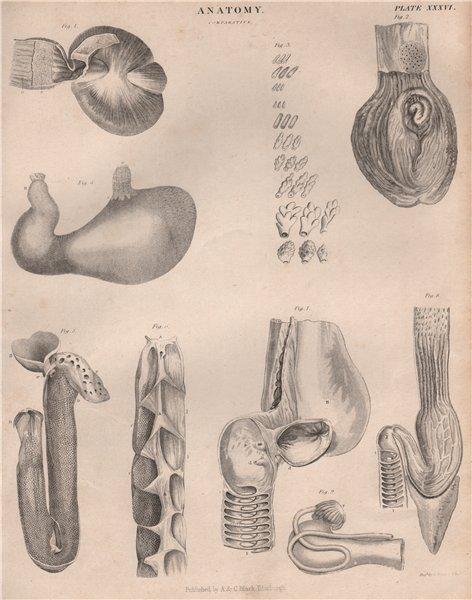 Associate Product Anatomy; Comparative 2. BRITANNICA 1860 old antique vintage print picture