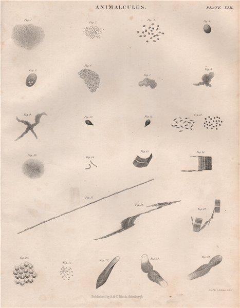 Associate Product Animalcules. Protozoans 1. BRITANNICA 1860 old antique vintage print picture