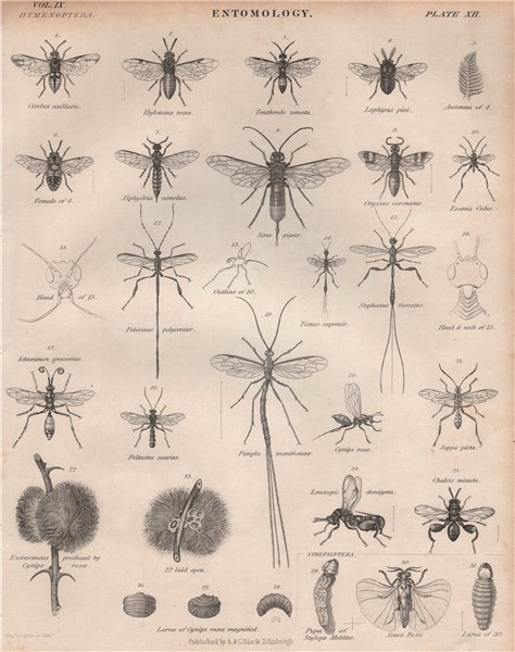 Associate Product ENTOMOLOGY 12. Insects flies fly bugs. BRITANNICA 1860 old antique print