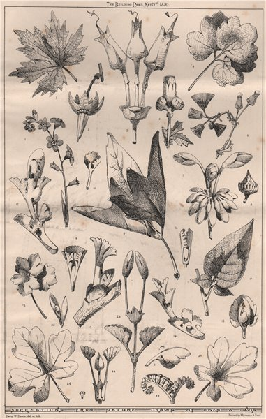 Associate Product Suggestions from nature; Drawn by Owen W. Davis. Decorative 1870 old print
