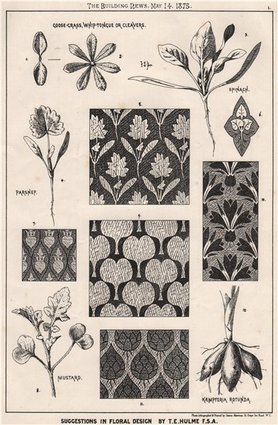 Associate Product Goose-Grass Whip-Tongue or Cleavers; Floral design by T.E. Hulme  1875 print