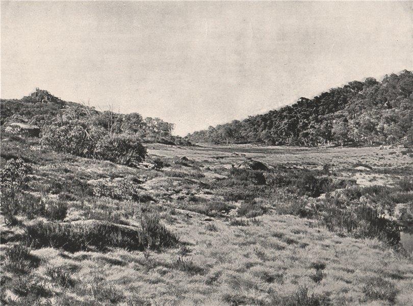 Associate Product Buffalo Mountains. Camp Plain looking South. Victoria, Australia. 1908 print