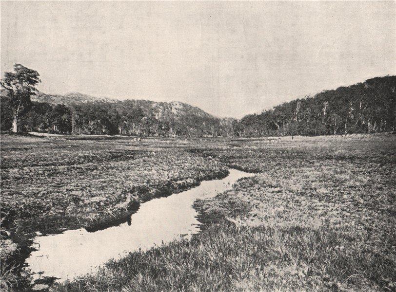 Associate Product Buffalo Mountains. The Long Plain looking West. Victoria, Australia. 1908