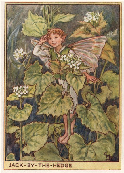 Jack-by-the Hedge Fairy by Cicely Mary Barker. Wayside Flower Fairies c1948