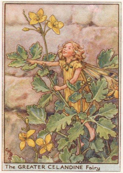 Associate Product Greater Celandine Fairy by Cicely Mary Barker. Wayside Flower Fairies c1948
