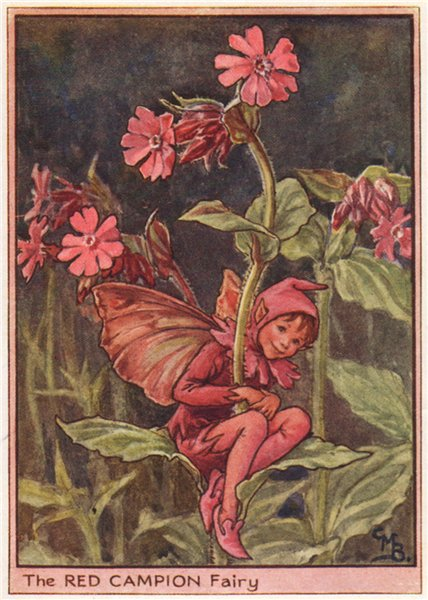 Associate Product Red Campion Fairy by Cicely Mary Barker. Wayside Flower Fairies c1948 print