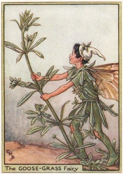 Associate Product Goose-Grass Fairy by Cicely Mary Barker. Wayside Flower Fairies c1948 print