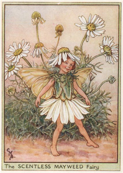 Associate Product Scentless Mayweed Fairy by Cicely Mary Barker. Wayside Flower Fairies c1948
